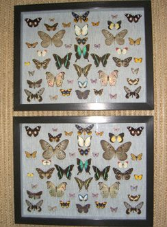 Pair of Butterfly Cases